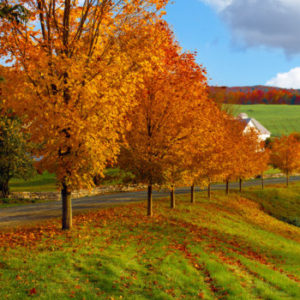 Autumn landscape of rolling hills covered with bright colorful trees and leaves along a country road.